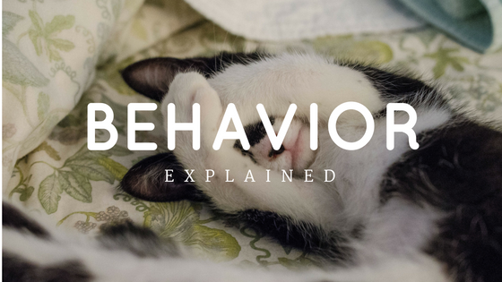 Three Undesirable Behaviors, Explained